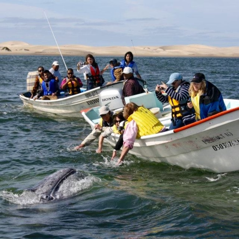 Whale watching in Magdalena Bay, Baja California Mexico by Aerocalafia
